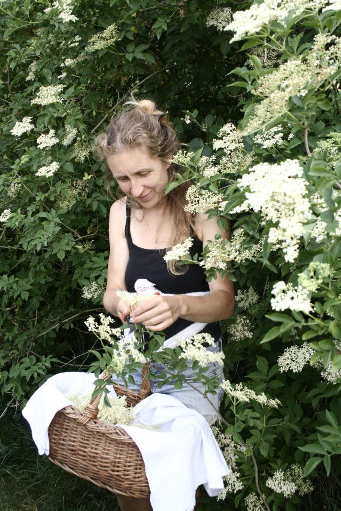 Journée se relier aux plantes comestibles et médicinales compagnes de notre jardin intérieur (2 jours) @ Sous les tilleuls