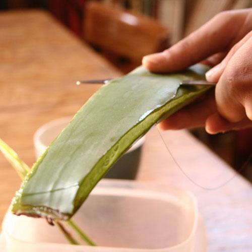 Préparer son gel d'Aloe vera maison